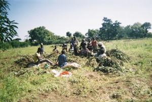 Photograph taken by research participants depiciting collaborative working in farming activities in Northern Ghana