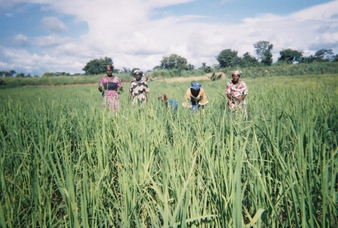 A photo taken by a farmer in Upper West Region, Ghana