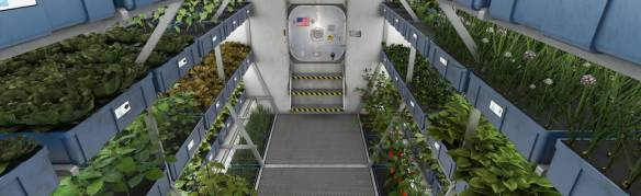 Crops growing on the International Space Station for the Veggie research project. Image: NASA, 2015