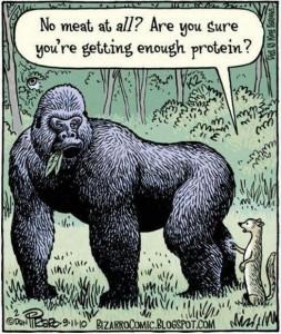 Gorilla protein image